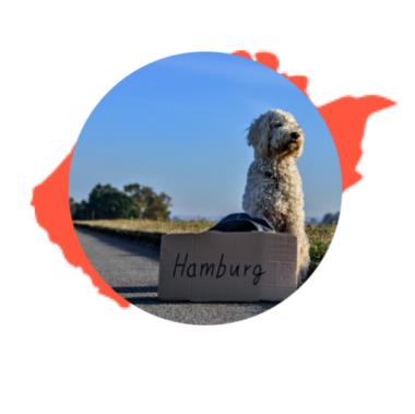 https://www.justgostudium.cz/wp-content/uploads/2020/11/pes_hamburg_smouha_petra2-e1604316509731.png